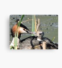 The Gift Of Feathers Canvas Print