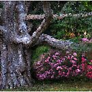 Oak Rhodie Panorama by Wayne King