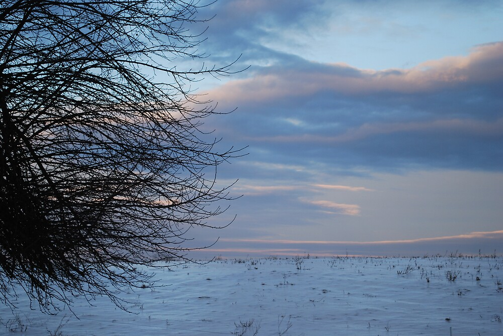 Winter Tree and Field at Dusk by BernieG