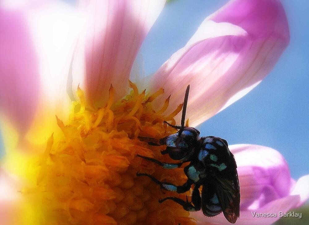 Bright Blue Bee! by Vanessa Barklay