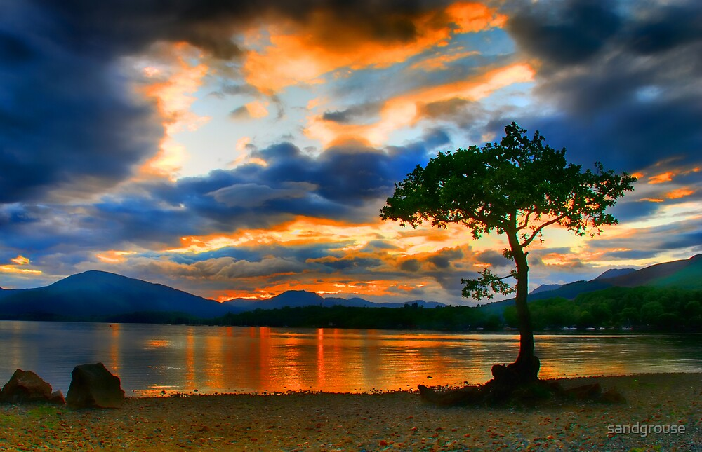 Lomond Tree by sandgrouse
