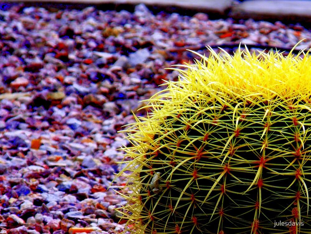 Barrel Cactus by julesdavis