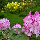 Pink and White Rhododendron by Elaine Bawden