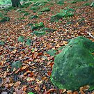 Autumn in Meanwood, Leeds England by Mishimoto