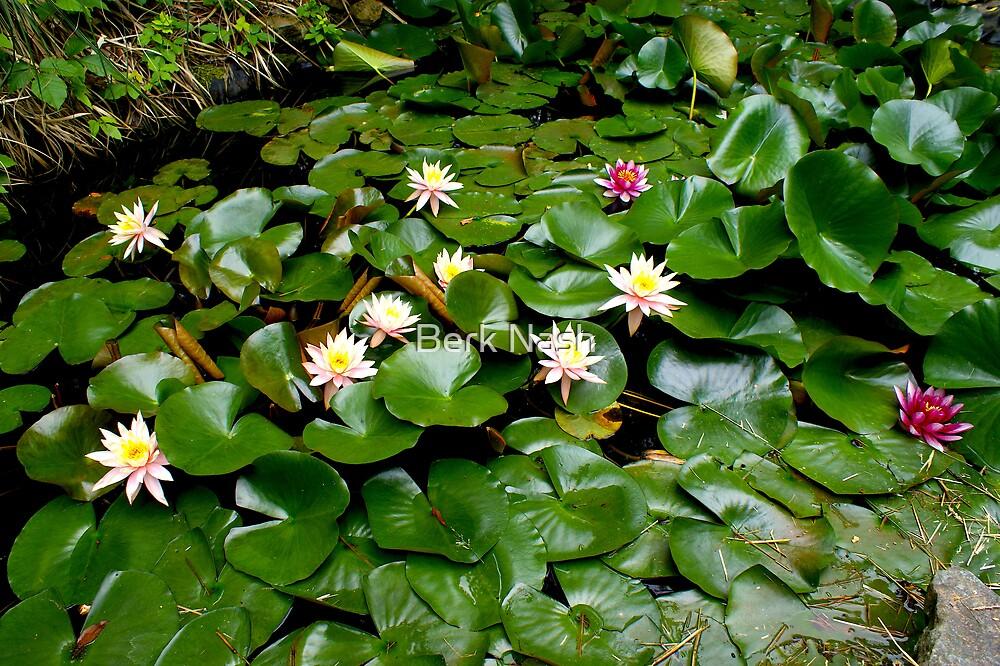 Waterlilys by Berk Nash