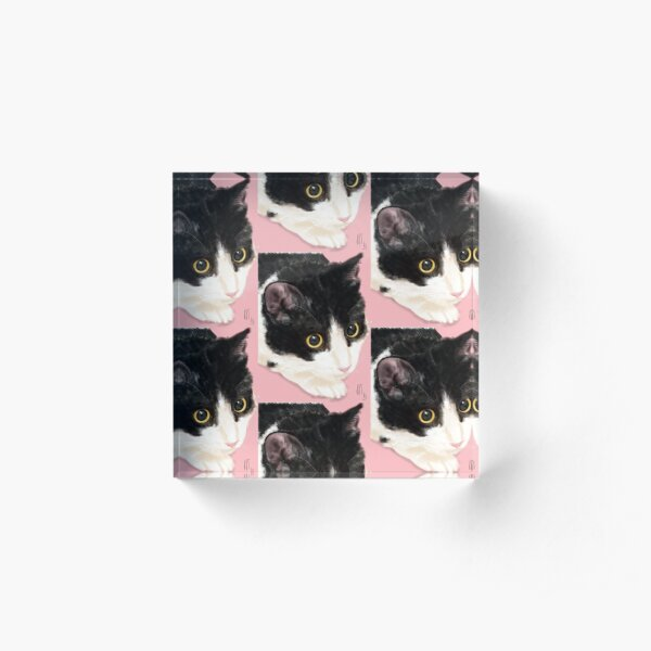 Black and White Cat on a Pink Background  Acrylic Block
