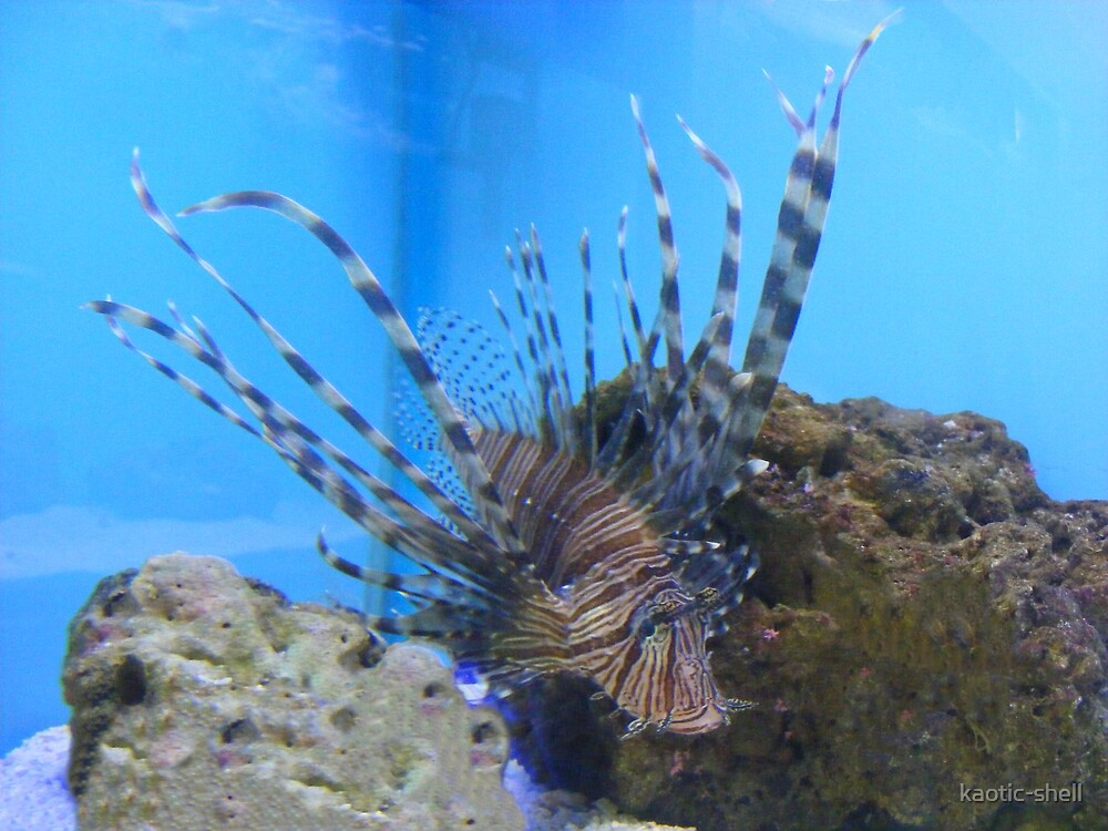 lion fish by kaotic-shell