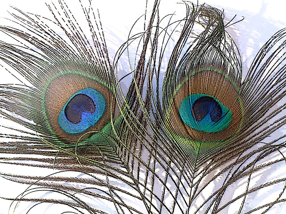 Peacock Feathers by GulfCoastArtist