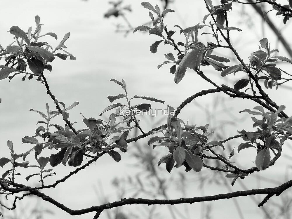 Leaves by karenlynda