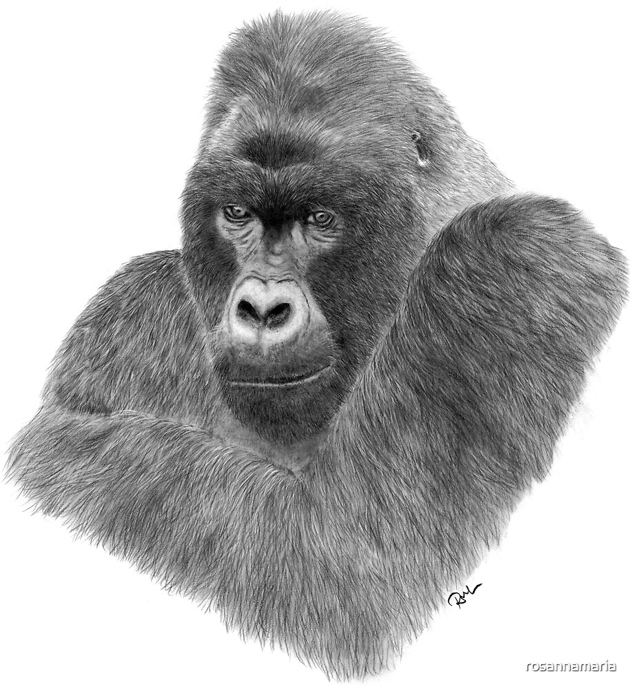 Mountain Gorilla by rosannamaria