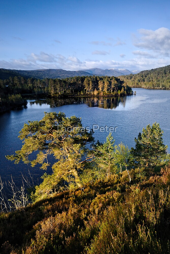 Glen Affric by Thomas Peter