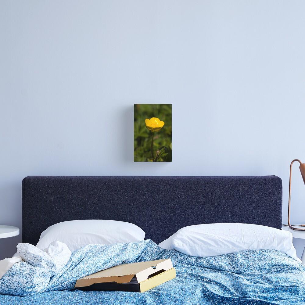 Creeping Buttercup (Ranunculus repens) Canvas Print
