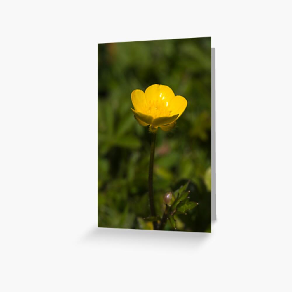 Creeping Buttercup (Ranunculus repens) Greeting Card