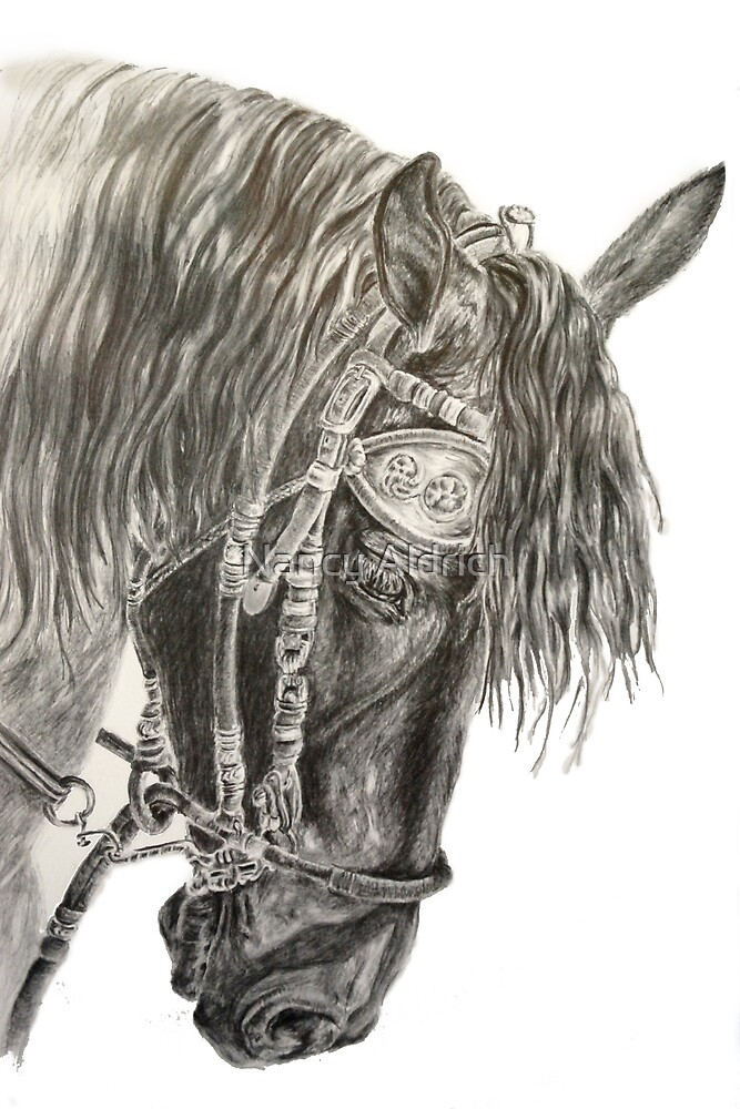 The Show Horse by Nancy Aldrich