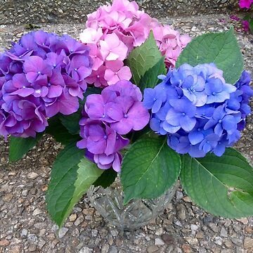 Hydrangea Bouquet by captured-moment