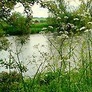 River View by karenlynda