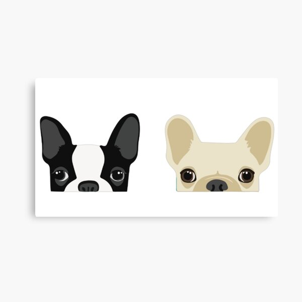 Boston Terrier And French Bulldog Canvas Print