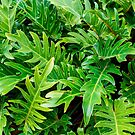 Tropical green leaves pattern by faithie