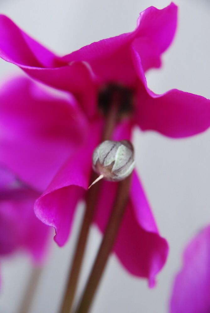 Pretty In Purple by lisamgerken