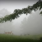 Morning Fog by Patricia Montgomery