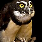 Spectacled Owl by Sue  Cullumber