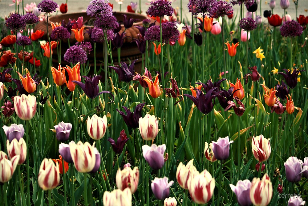 Field Of Colors Flowers by terrebo