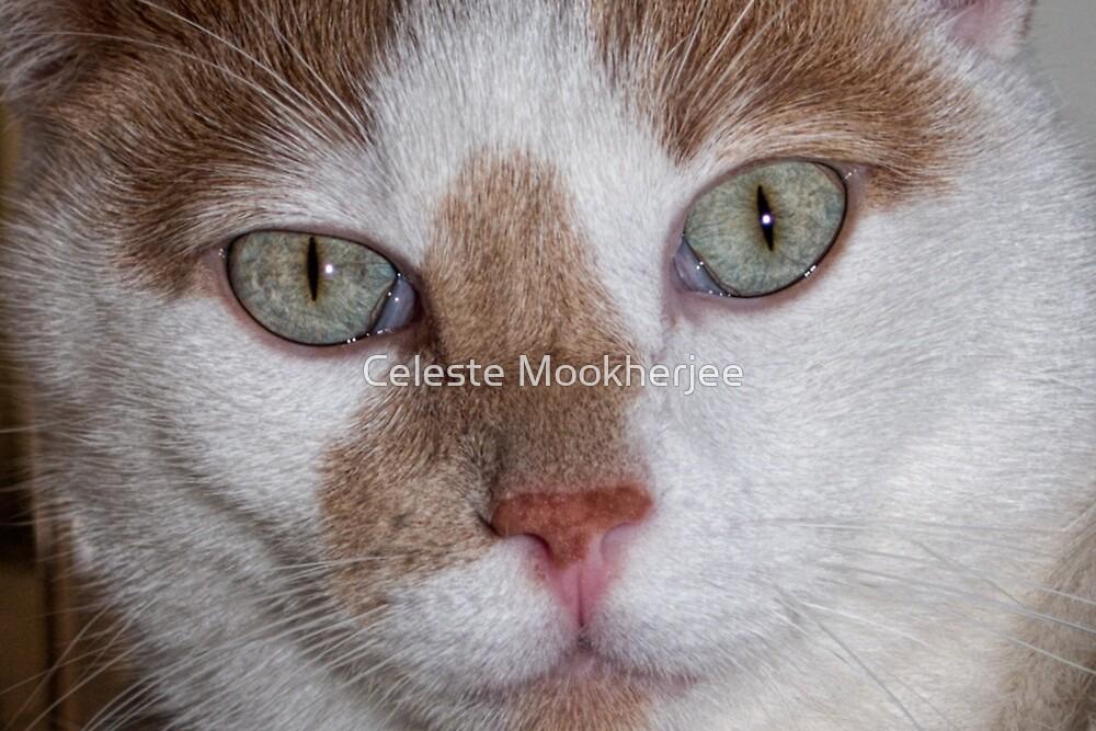 Maos Augen von Celeste Mookherjee
