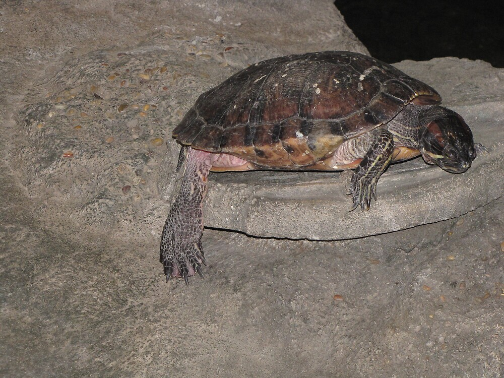 Relaxing on the half shell by Ruth Ford