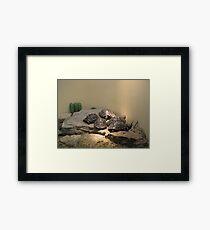 Baby turles Framed Print