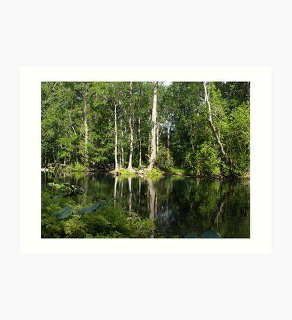 Reflections On The Ocklawaha River Art Print