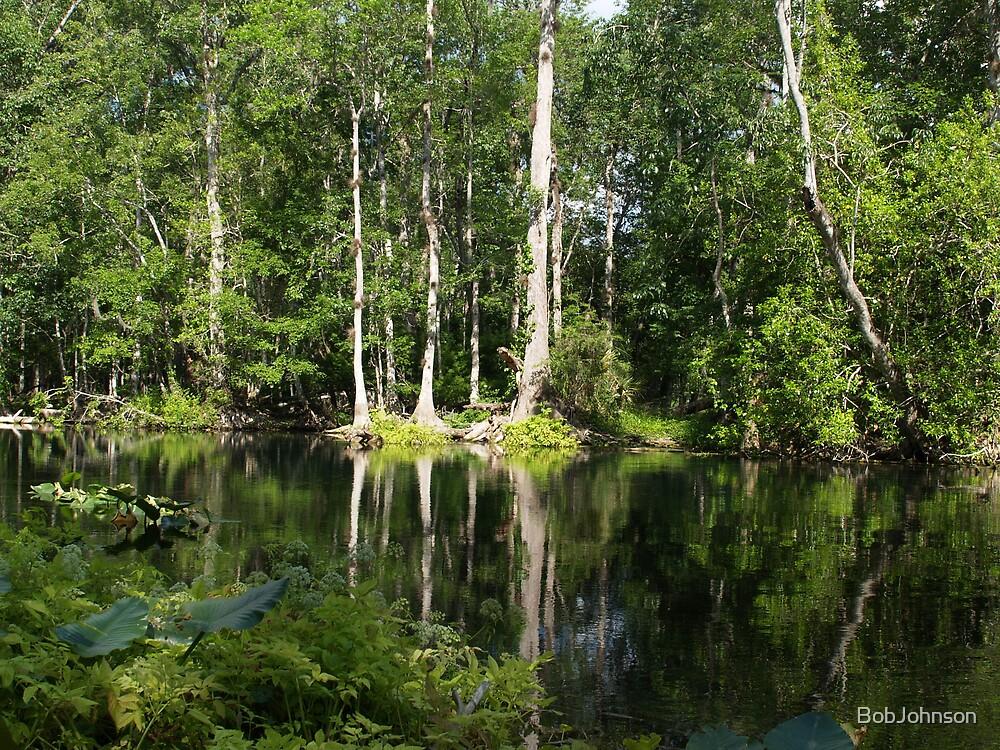Reflections On The Ocklawaha River by BobJohnson