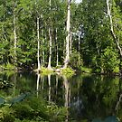 Reflections On The Ocklawaha River by BobJohnson