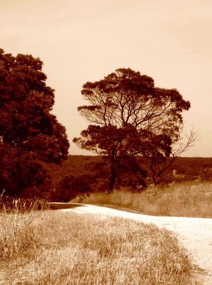 Country Road by handmaidbyhelen