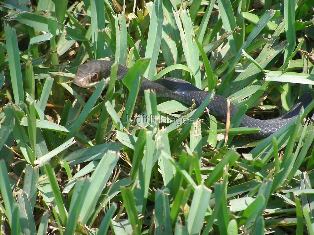 Snake in the Grass by Judith Hayes