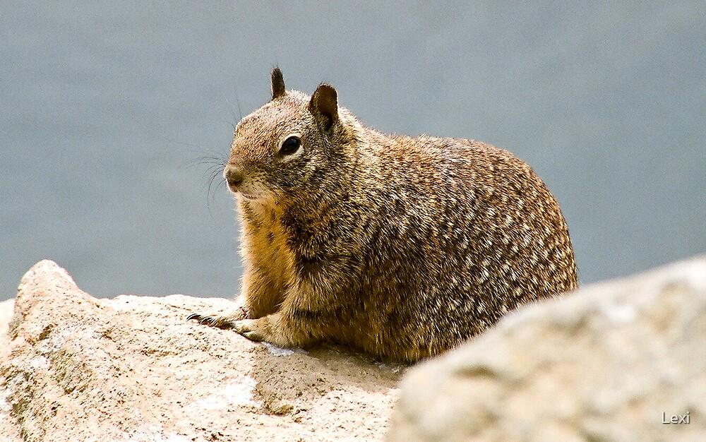 Ground Squirrel Morrow Bay by Lexi