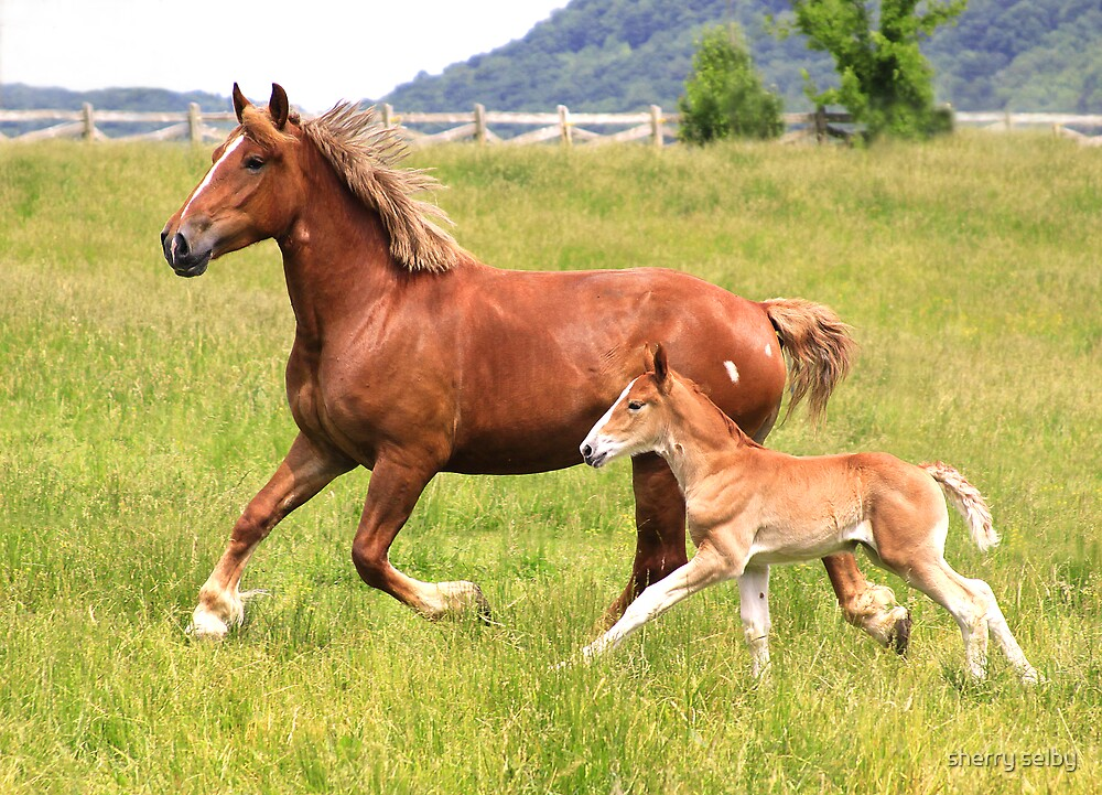 Mare with her colt by sherry selby