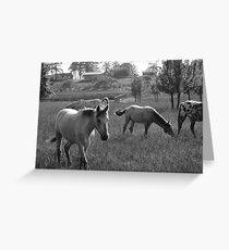 neighborhood horses (4) Greeting Card