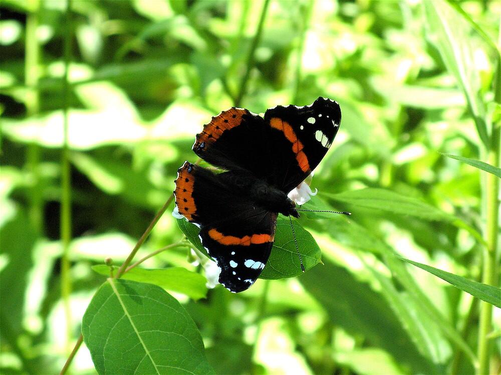 butterfly by vizhen