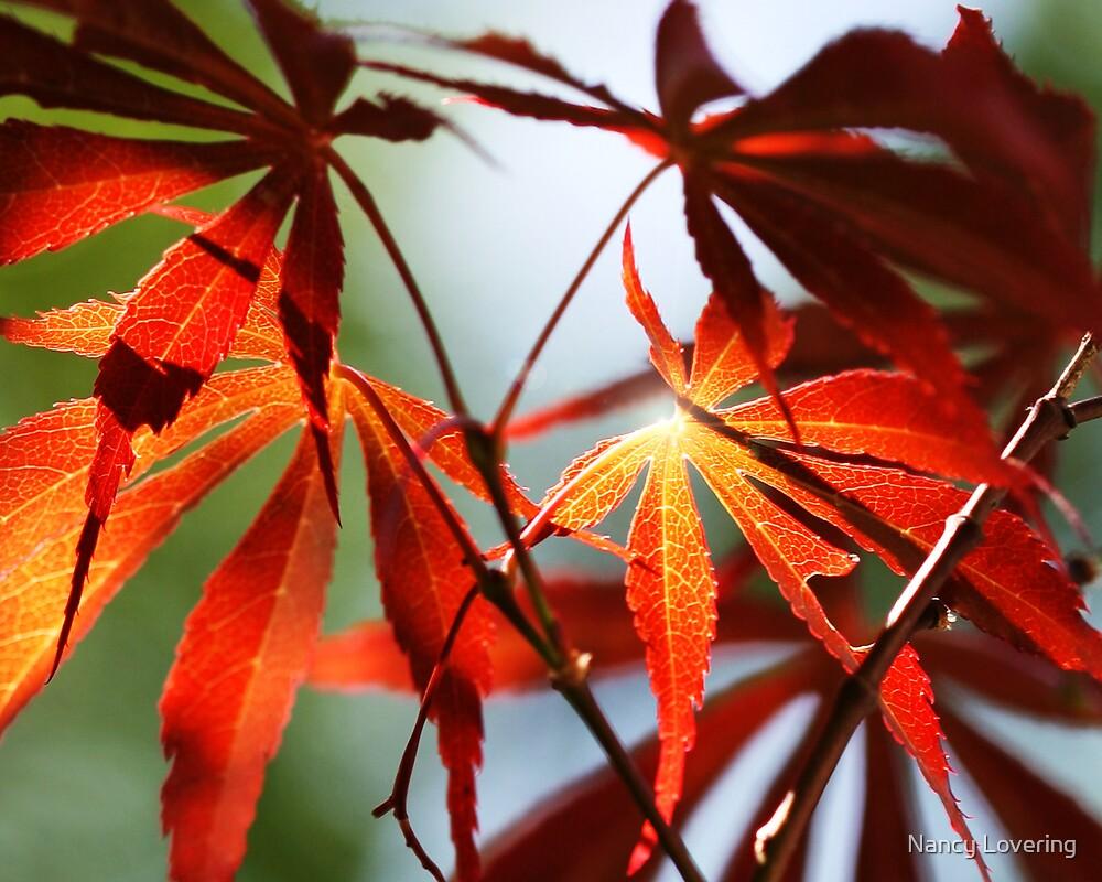 Red Leaves 40 by Nancy Lovering