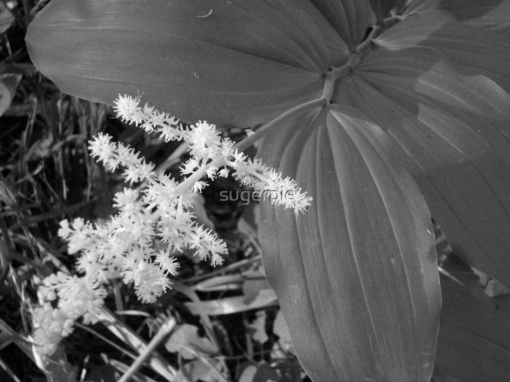 Pokie flower by sugerpie