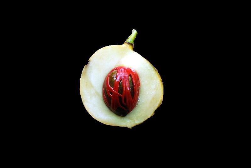 nutmeg funk by Tamara Cornell