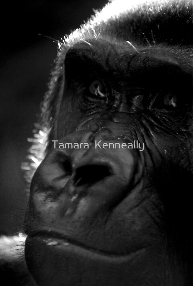 Gorilla by Tamara  Kenneally