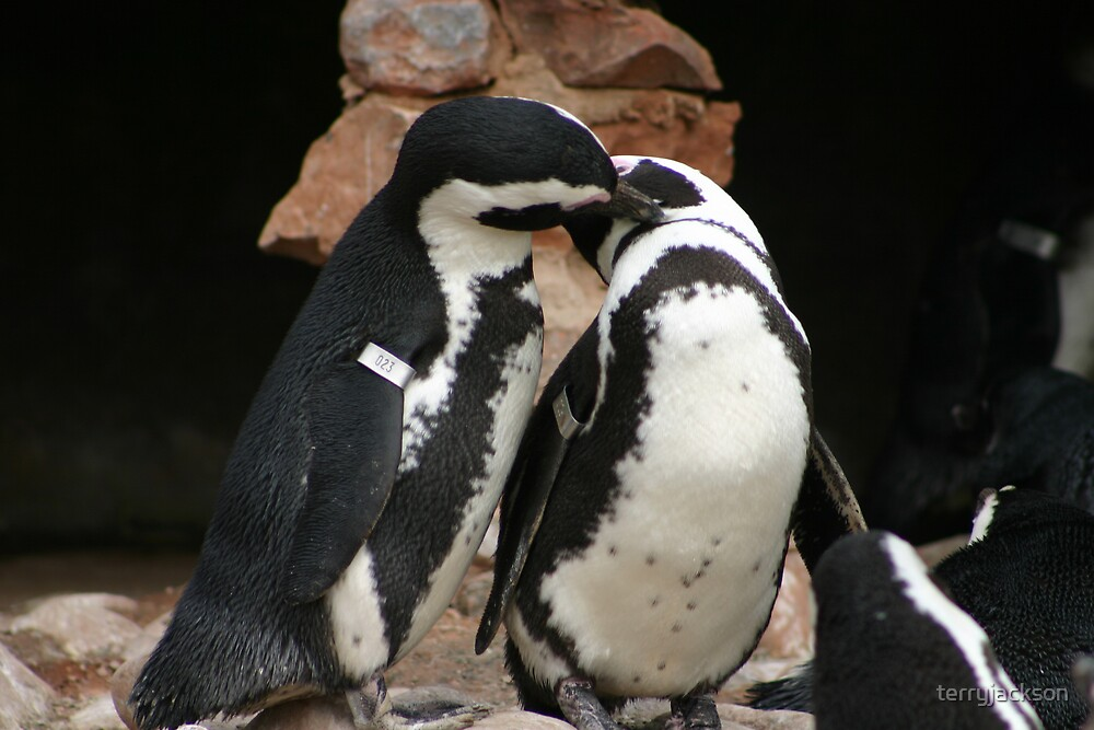 Penguin affection by terryjackson