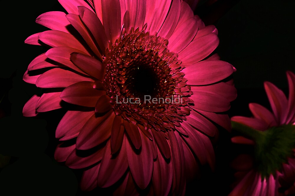 Glow in the dark by Luca Renoldi