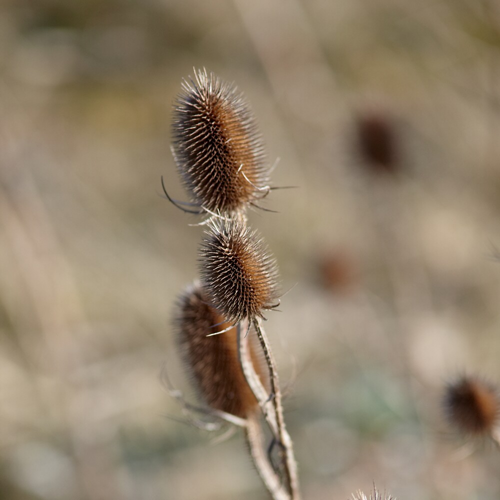 Seed Buds by Paul Burgess