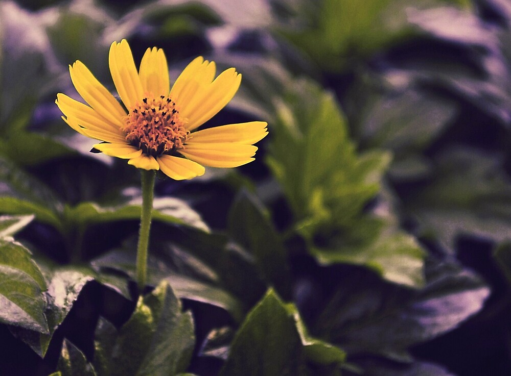Another Flower.. by chiogonzalez