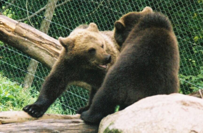 Frisky Bears! by stevebrittain