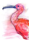 The Scarlet Ibis by Kendra Shedenhelm