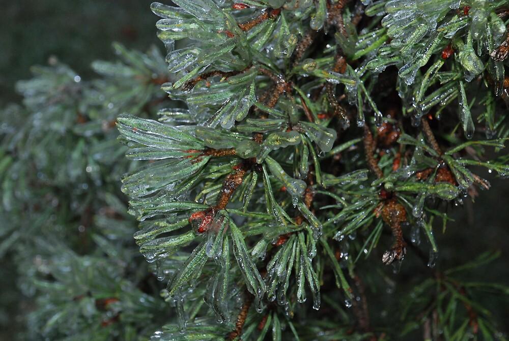Icy Pine by SchoolBusJoe