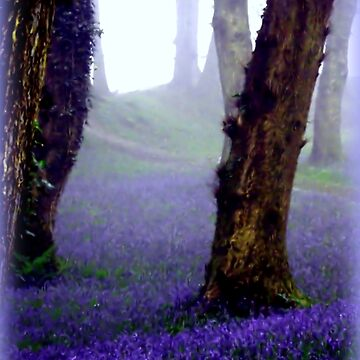 Bluebells in the Mist by Sita
